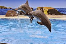 Dolphin Marine Conservation Park, Coffs Harbour, Australia