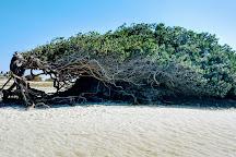 Tree Sloth, Jericoacoara, Brazil