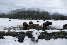 Creamery Brook Bison, Brooklyn, United States