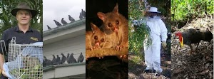 Peter the Possum & Bird Man - Pest Control Brisbane