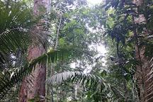 Museu da Amazonia (MUSA), Manaus, Brazil
