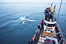 Whale Watching Hjalteyri, Hjalteyri, Iceland