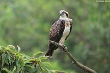 Urdaibai Bird Center, Gautegiz Arteaga, Spain