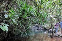 Waisali Rainforest Reserve, Savusavu, Fiji