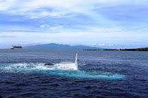 Atlantis Submarines Maui, Lahaina, United States