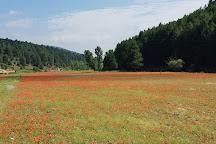 Canon del Rio Lobos Natural Park, San Leonardo de Yague, Spain