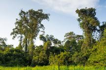 Nouabalé-Ndoki National Park, Sangha Department, Republic of the Congo