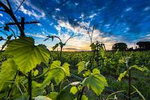 Baldacci Family Vineyards, Napa, United States