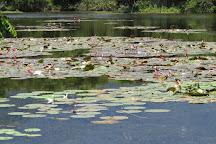 REGUA - Reserva Ecologica de Guapiacu, Cachoeiras de Macacu, Brazil
