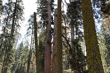 Giant Forest, Sequoia and Kings Canyon National Park, United States
