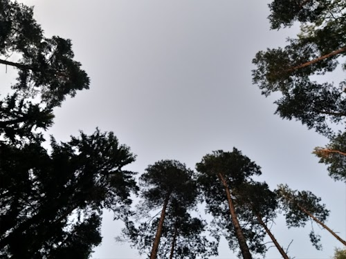 Brocēnu Mežaparks