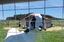Plum Loco Animal Farm, Egg Harbor, United States