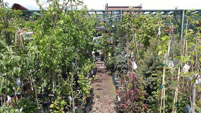 Verni's Garden Center