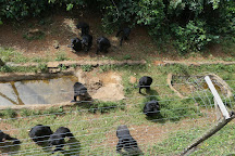 Tacugama Chimpanzee Sanctuary, Freetown, Sierra Leone