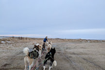 Dogsledding Iceland, Mosfellsbaer, Iceland