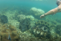 Giant Clam Sanctuary, Savaia, Samoa