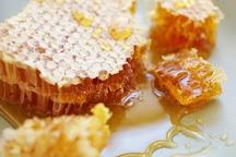 Hachi Chocolate Homemade & Honey, Thekkady, India