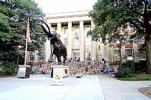 University of Nebraska State Museum, Lincoln, United States