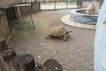 Alameda Park Zoo, Alamogordo, United States
