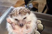 Hedgehog Cafe HARRY, Harajuku, Shibuya, Japan