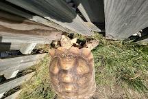 Black Pine Animal Sanctuary, Albion, United States