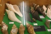 Malacological Museum Piceno, Cupra Marittima, Italy