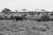 Seronera, Serengeti National Park, Tanzania