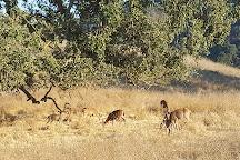 Rancho San Antonio County Park, Cupertino, United States