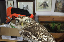 Festival Park Owl Sanctuary, Ebbw Vale, United Kingdom