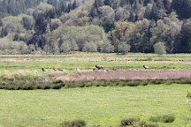 Dean Creek Elk Viewing Area, Reedsport, United States