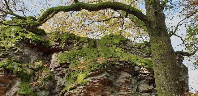Parc national Hunsrück-Hochwald