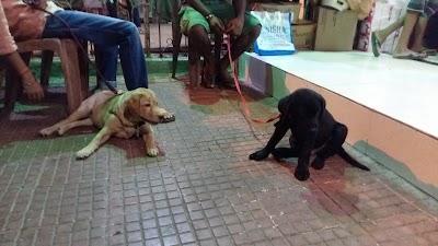 Pluto Pet Clinic