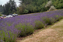 Blue Willow Lavender Farm, Gig Harbor, United States