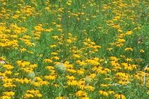 Vermont Wildflower Farm, Charlotte, United States