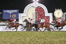 Racing & Equestrian Club, Doha, Qatar