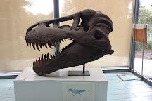 Izu Ammonite Museum, Ito, Japan