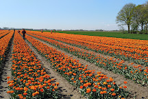 Kwekerij Siem Munster (Tulip Excursion), Slootdorp, The Netherlands