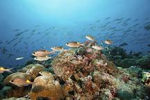 Palau Dive Adventures, Koror, Palau
