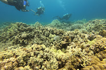 In2Scuba Diving Maui Dive Co., Lahaina, United States
