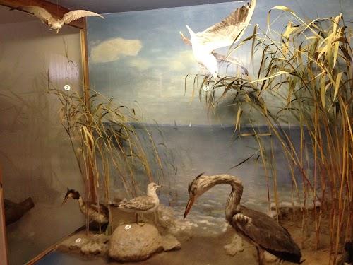Viljandi Museum