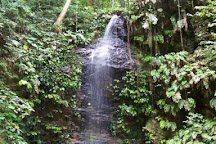 Brownsberg Nature Park, Paramaribo, Suriname