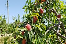 Green Acres Fernery & Citrus, Yalaha, United States
