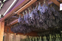 Peace Valley Lavender Farm, Doylestown, United States