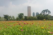 Yeouido Hangang Park, Seoul, South Korea