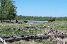 Elk Island National Park, Edmonton, Canada