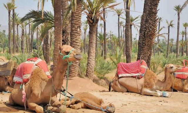 Oujdani Marrakech Tours