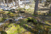 Spruce Bog Boardwalk Trail, Algonquin Provincial Park, Canada
