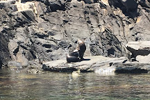 Kangaroo Island Ocean Safari, Penneshaw, Australia