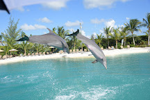Dolphin Cove Cayman, West Bay, Cayman Islands