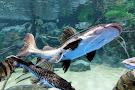 Electric City Aquarium & Reptile Den